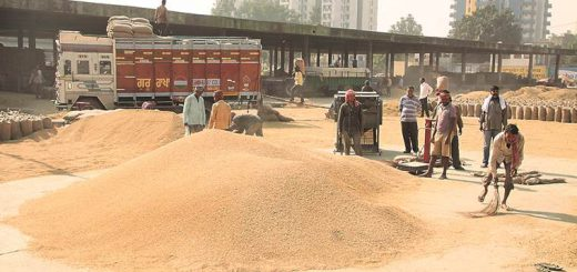 Punjab govt now wants tractor trailers to ferry paddy harvest